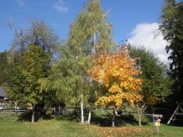 Schmiede-Mariahof_Natur-4