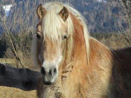 Ferienhaus_Schmiede_Tiere-7